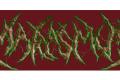 US death metal band Marasmus get signed on Transcending Obscurity Int. Distribution